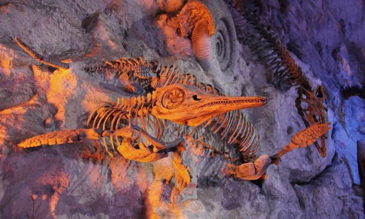 Факты о динозаврах