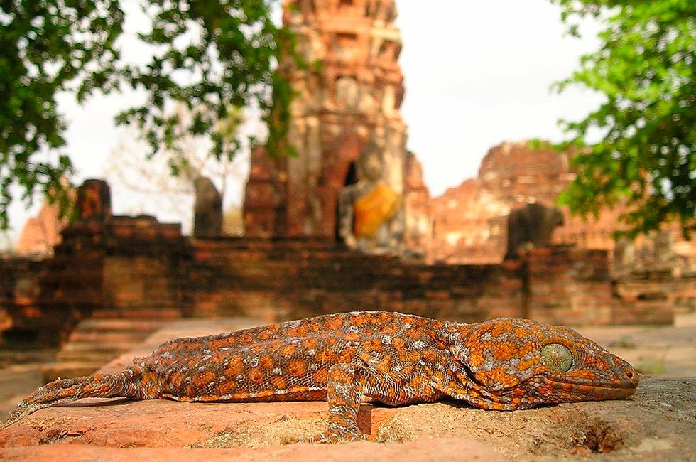Лаосские сказки